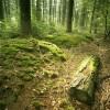 Rezultatele Inventarului Forestier National
