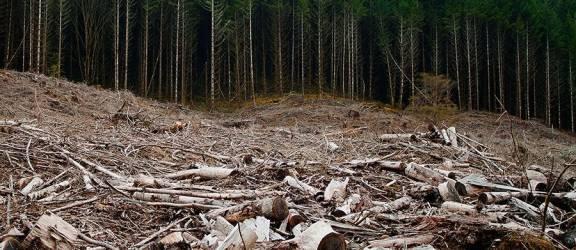 Liber la supraexploatarea pădurilor