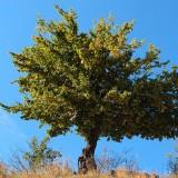 Sesizare cu privire la Subfinantarea  Sectorului Forestier – PNDR 2014-2020