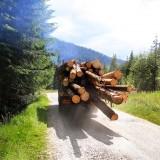 Zero fonduri europene 2014-2020 = presiune pe exploatări intensive, creşterea tăierilor ilegale şi vânzarea teritoriului