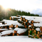 Supraimpozitarea pădurilor