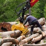 Amânarea codului silvic – bucuria mafiei lemnului şi samsarilor de păduri!!!