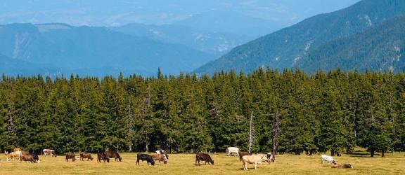 Modificarea ordinului nr. 619/2015 al Ministerului Agriculturii şi Dezvoltării Rurale