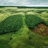 Cât lemn mai avem în pădurile României?
