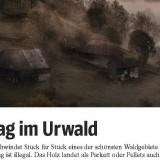Schweighofer încearcă să MUŞAMALIZEZE scandalul lemnului tăiat ilegal