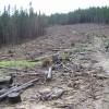 Comisie Prezidenţială pentru analiza pădurilor României!