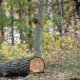Certificatul FSC al Holzindustrie Schweighofer a fost SUSPENDAT. Comentariile EIA