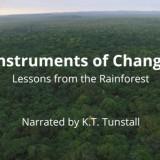VIDEO | Trupa Maroon 5 susține lupta împotriva tăierilor ilegale de păduri din România