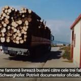 Camioanele Fantomă: Schweighofer continuă să achiziționeze lemn tăiat ilegal. Întregul proces, expus într-un film realizat de EIA