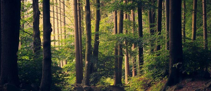 Europa a stabilit 10 ținte de atins în domeniul pădurilor până în 2040