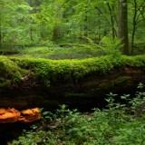 Infrigement pe păduri: Comisia Europeană cere implementarea directivelor europene, România suprareglementează!